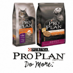 Petco: Free Bag of Pro Plan Dry Dog or Cat Food w/ Printable Coupon