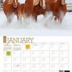 Free 2014 Ultimate Horse Care Calendar