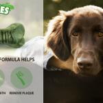 Free Sample of Minties Dog Treats + Coupon