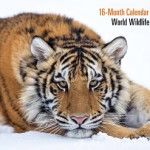 Free 2014 Wildlife Calender Courtesy of WWF!
