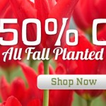 50% Off Holland Bulb Farm Planted Items + Free Shipping on $25 Orders
