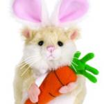 Easter Webkinz Animals on Sale (Bunny & Lamb)