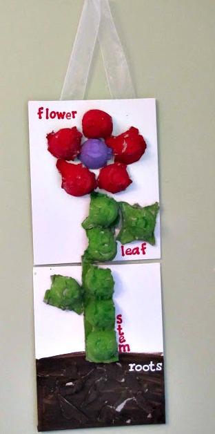 parts-of-a-plant-egg-carton