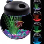 1 Gallon LED Fish Bowl Only $19 Shipped (Reg $30)