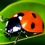 1500 Live Ladybugs for the Garden Only $15 Shipped